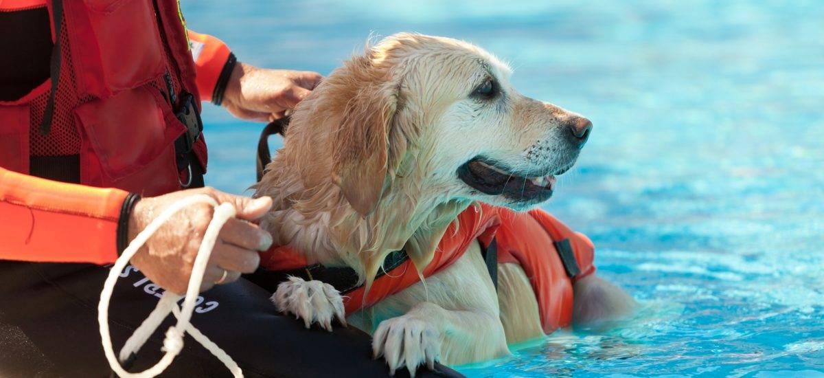 ÖGV Rettungshund
